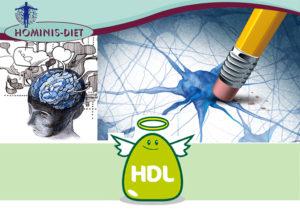 HDL, un alleato per la memoria